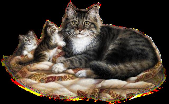 Výsledok vyhľadávania obrázkov pre dopyt png gif kutyák macskák