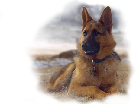 Výsledok vyhľadávania obrázkov pre dopyt png gif kutyák kutyák