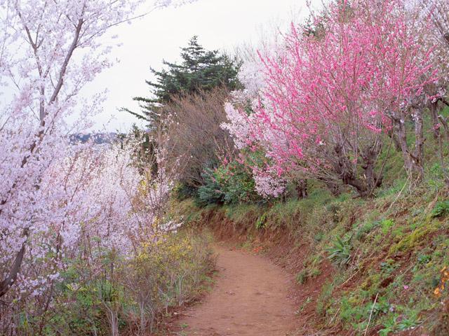 Výsledok vyhľadávania obrázkov pre dopyt png gif tavaszi tájak